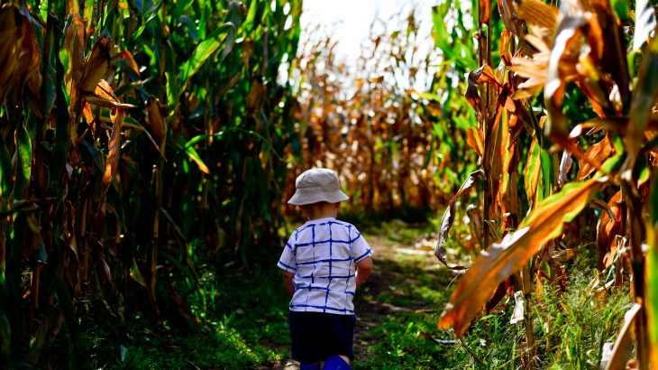 corn maze portland oregon weekend fun