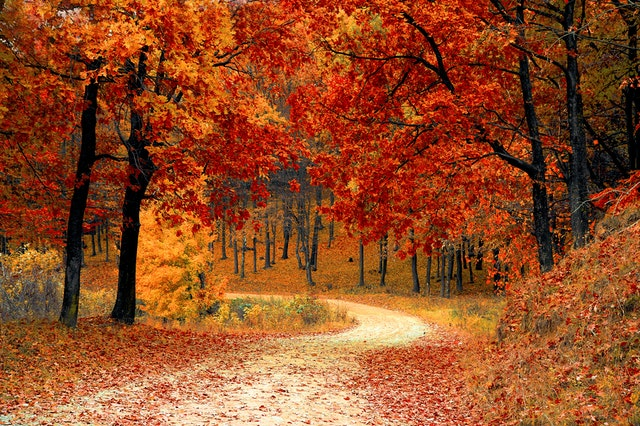 Top 4 life lessons we learn from Fall